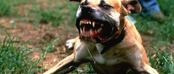 Σκύλος προσπάθησε να σώσει την ιδιοκτήτριά του όταν εκείνη κατέρρευσε