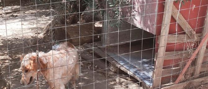 Χανιά: Στα κρατητήρια μητέρα δύο ανήλικων παιδιών για ένα… σκυλόσπιτο