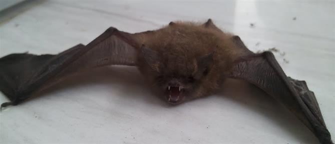 Κορονοϊοί εντοπίστηκαν σε νυχτερίδες εκτός Κίνας