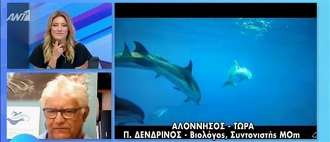 Αλόννησος: η αύξηση του αριθμού των δελφινιών και το πρόγραμμα της MOm (βίντεο)