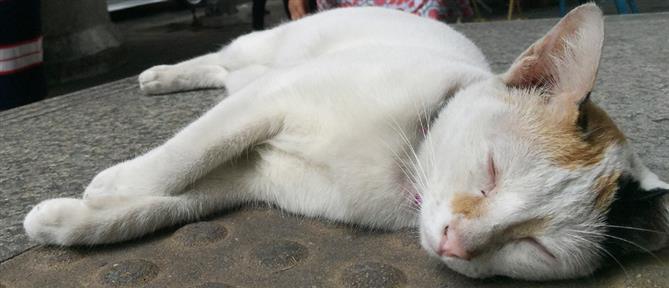 Λέσβος: Εκτέλεσε εν ψυχρώ γάτα γιατί... έσκιζε τις σακούλες σκουπιδιών