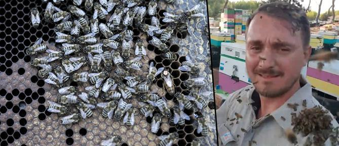 Ο μελισσοκόμος από τη Ζαχάρω που έγινε viral παίζοντας με χιλιάδες μέλισσες (βίντεο)