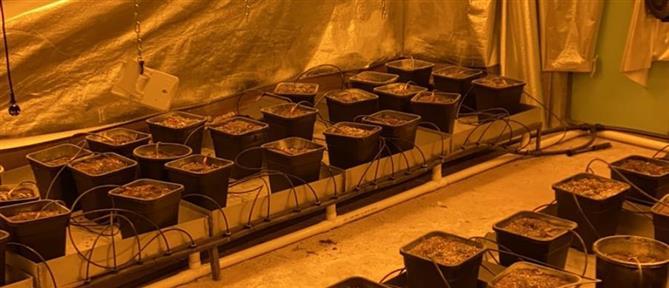 Καλλιεργούσαν κάνναβη κλέβοντας… ρεύμα (βίντεο)
