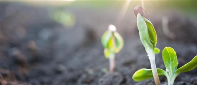 Ενίσχυση 70 εκ. ευρώ για χιλιάδες μικροκαλλιεργητές