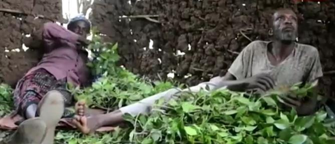 """Τι είναι το ναρκωτικό Khat που εντοπίστηκε στο """"Ελευθέριος Βενιζέλος"""" (βίντεο)"""
