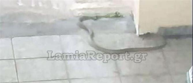 Φίδι τρύπωσε σε πολυκατοικία