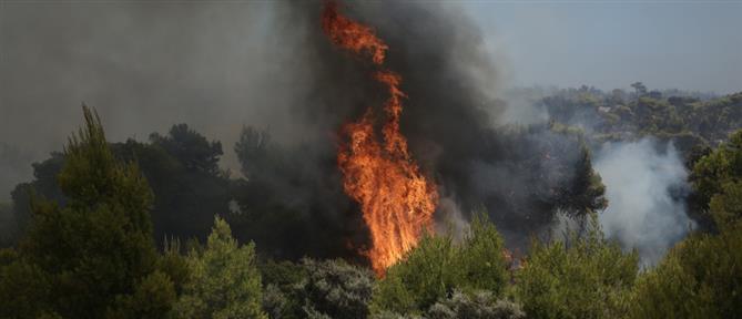 Φωτιά στο Σουφλί