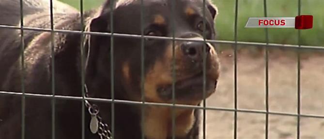 Γιατί οι σκύλοι δαγκώνουν παιδιά και μωρά; Τι λένε ειδικοί στον ΑΝΤ1 (βίντεο)
