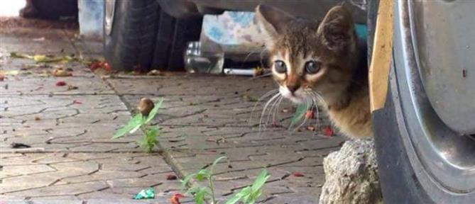 """Θεσσαλονίκη: Έκλεβαν οδηγούς με """"παγίδα"""" ένα…γατάκι!"""