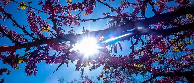 Καιρός: ήλιος και άνοδος της θερμοκρασίας τη Δευτέρα