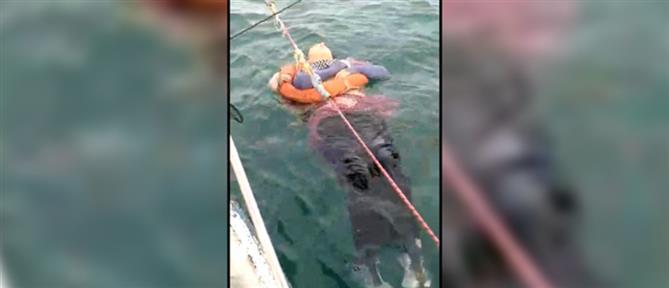 Αγνοούμενη επί δύο χρόνια διασώθηκε από τη θάλασσα (βίντεο)