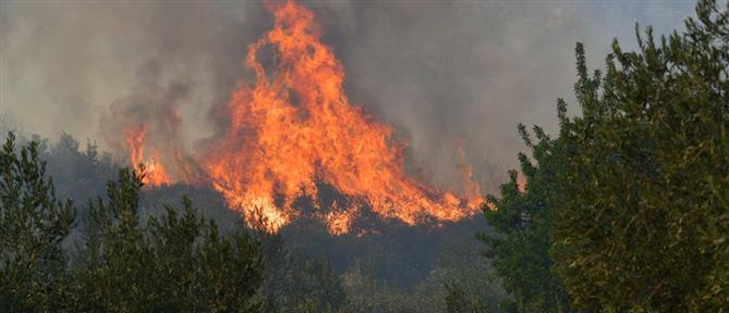 Φωτιές: Ποιες περιοχές είναι σε συναγερμό την Τρίτη