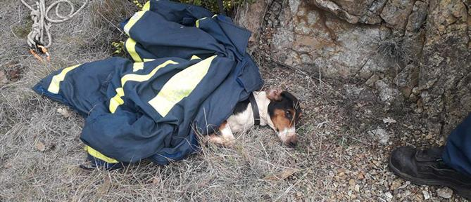 Κοζάνη: Σκύλος έπεσε σε πηγάδι 20 μέτρων (εικόνες)