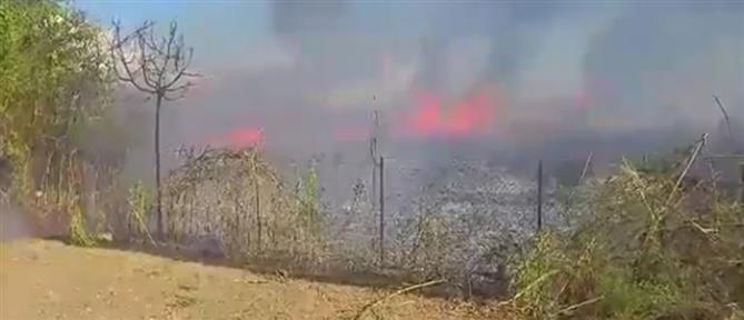 Καλαμάτα: Φωτιά κοντά στο αεροδρόμιο (βίντεο)