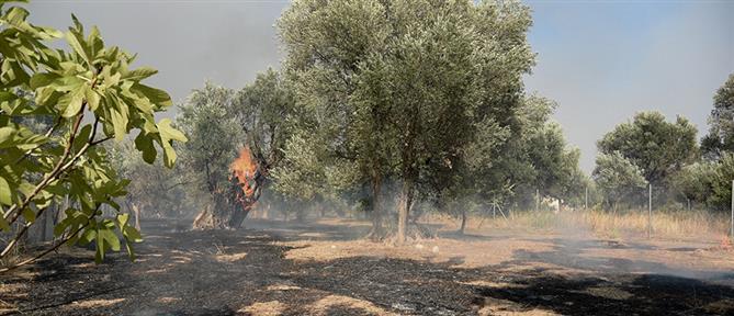 Φωτιά στην Αχαΐα: Τα μέτρα για τους πυρόπληκτους