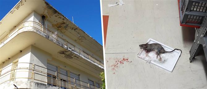 ΠΟΕΔΗΝ: ποντίκια στο νοσοκομείο Κιλκίς (εικόνες)