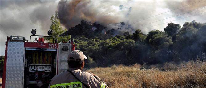 Πυροσβεστική: 49 δασικές πυρκαγιές το τελευταίο 24ώρο