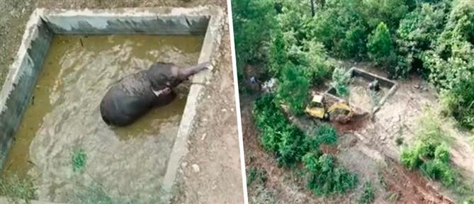 Διάσωση ελέφαντα από δεξαμενή (βίντεο)