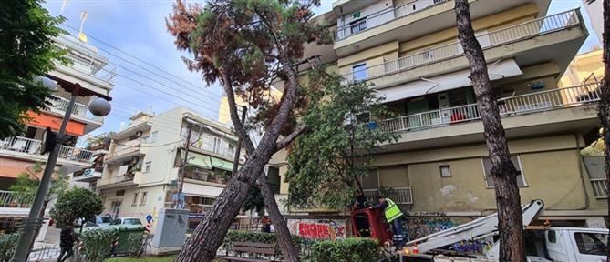 """Κακοκαιρία """"Μπάλλος"""" - Καλαμαριά: Δέντρο έπεσε πάνω σε πολυκατοικία"""