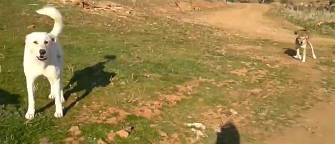 Άγρια επίθεση από σκυλιά δέχθηκε γυναίκα