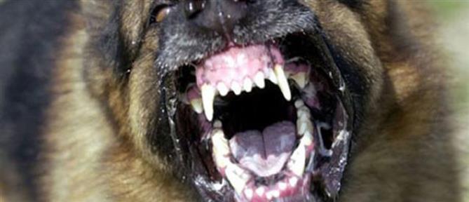 Δεσποζόμενος σκύλος επιτέθηκε και δάγκωσε παιδί
