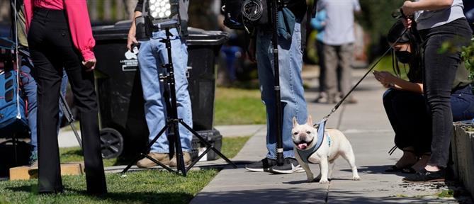 "Lady Gaga: βρέθηκαν τα σκυλιά για τα οποία έδινε αποζημίωση - ""μαμούθ"""