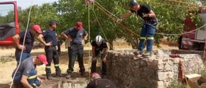 Κρήτη: Άλογο έπεσε σε πηγάδι - Μεγάλη επιχείρηση διάσωσης (βίντεο)