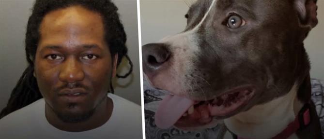 Άνδρας καταδικάστηκε γιατί επιχείρησε να πνίξει τον σκύλο της πρώην του (εικόνες)
