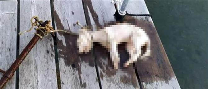 Έδεσαν σκυλάκι σε σωλήνα και το έπνιξαν (εικόνες)