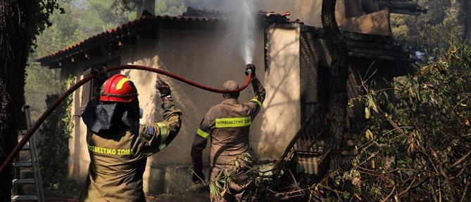 Φωτιά στη Σταμάτα: Δραματικές μαρτυρίες κατοίκων στον ΑΝΤ1 (βίντεο)