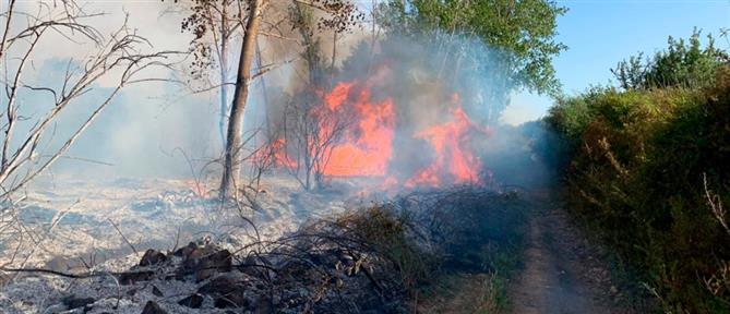 Μεγάλη φωτιά στη Σαρδηνία (βίντεο)