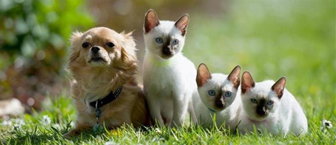 Νομοσχέδιο για ζώα συντροφιάς: οι άξονες και οι στόχοι