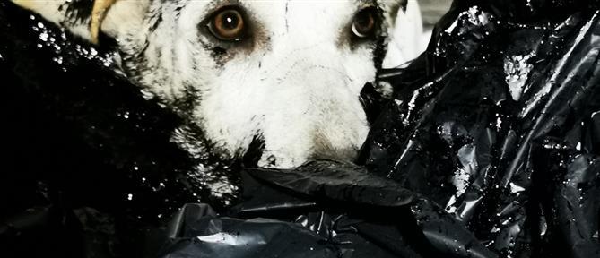 Κύπρος: Έλουσαν κουτάβια με πίσσα και τα πέταξαν στα σκουπίδια (εικόνες)