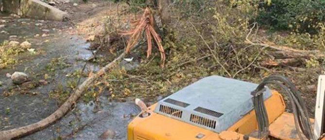 Νεκρός αγρότης που καταπλακώθηκε από δέντρο (εικόνες)