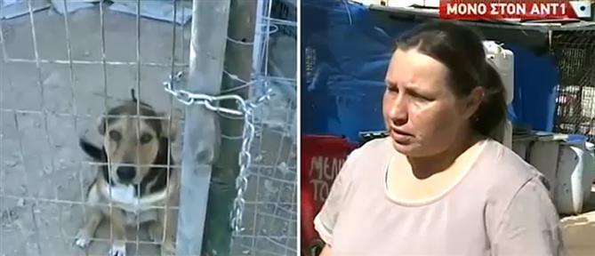 Ο ΑΝΤ1 στο καταφύγιο αδέσποτων ζώων στον Υμηττό (βίντεο)
