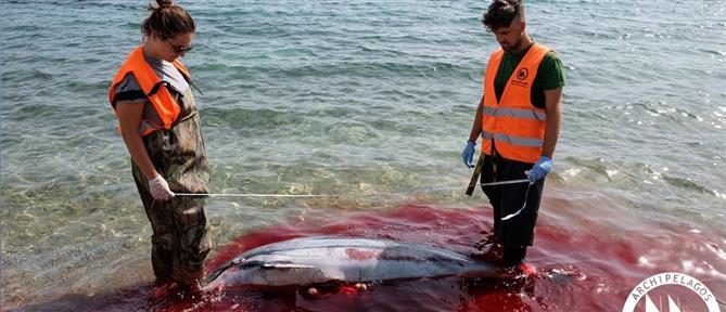 Έκοψαν με μαχαίρι τα πτερύγια δελφινιών και τα άφησαν να πνιγούν!