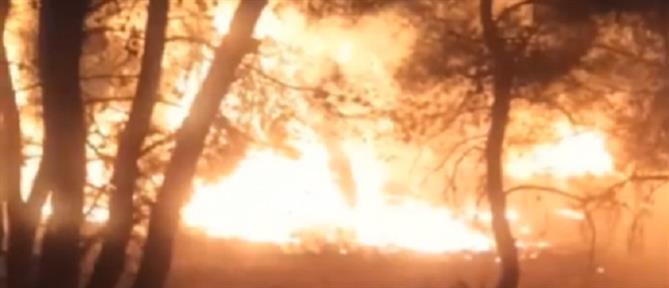 Φωτιά στη Νέα Μάκρη: ολονύχτια μάχη με τις φλόγες (εικόνες)